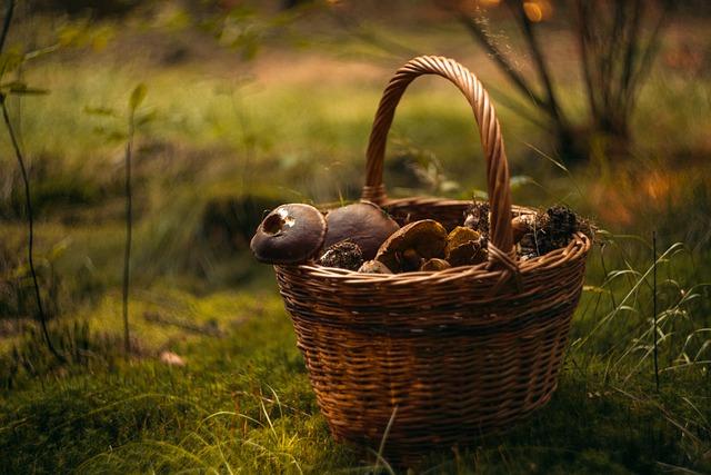 Dary lasu, czyli pyszne potrawy z grzybami